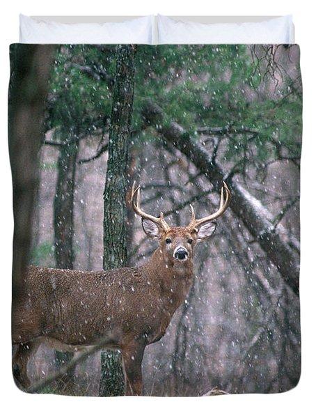 Eight Point Whitetail Deer Buck Duvet Cover