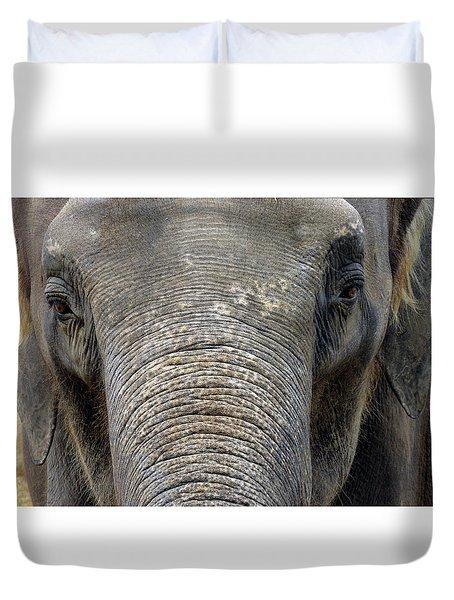 Elephant Close Up 1 Duvet Cover