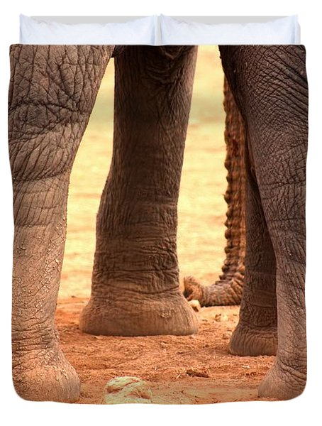 Duvet Cover featuring the photograph Elephant Family by Amanda Stadther