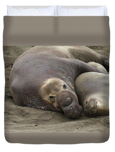 Elephant Seal Couple Duvet Cover by Duncan Selby
