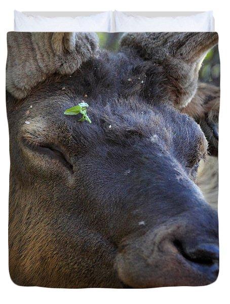Elk Chuckle Duvet Cover