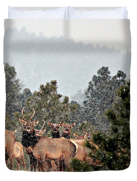 Duvet Cover featuring the photograph Elk In The Snowing Open by Barbara Chichester