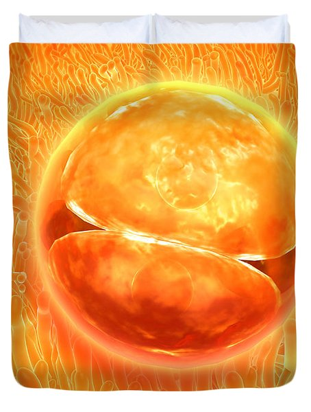 Embryo Development 24-36 Hours Duvet Cover by Stocktrek Images