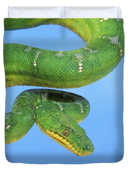 Emerald Tree Boa Corallus Caninus Duvet Cover by Thomas Kitchin & Victoria Hurst