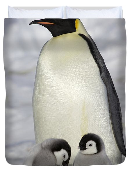 Emperor Penguin And Two Chicks Duvet Cover by Frederique Olivier
