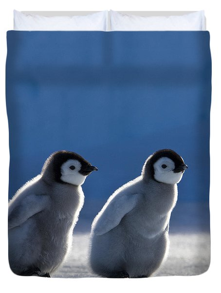 Emperor Penguin Chicks Duvet Cover by Jean-Louis Klein and Marie-Luce Hubert