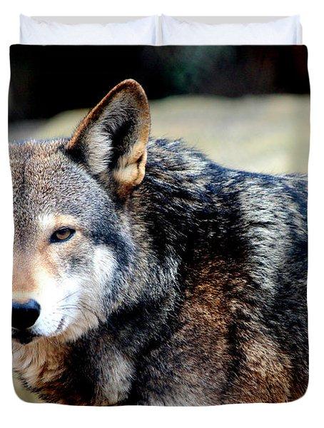 Endangered Red Wolf Duvet Cover