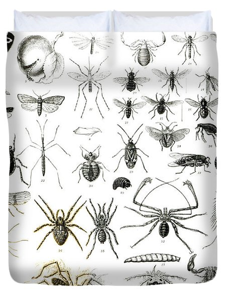 Entomology Myriapoda And Arachnida  Duvet Cover by English School