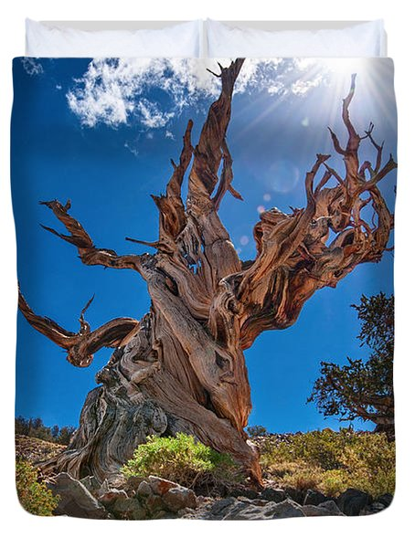 Eternity - Dramatic View Of The Ancient Bristlecone Pine Tree With Sun Burst. Duvet Cover