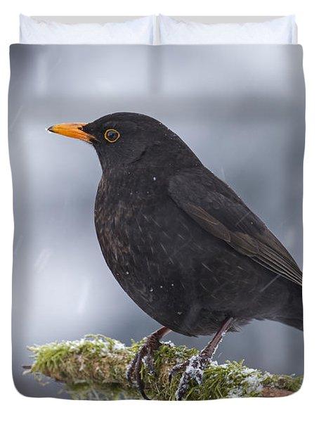 Eurasian Blackbird And Snowfall Germany Duvet Cover