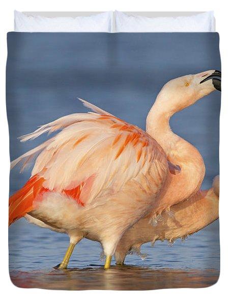 European Flamingo Pair Courting Duvet Cover