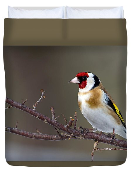 European Goldfinch  Duvet Cover by Torbjorn Swenelius