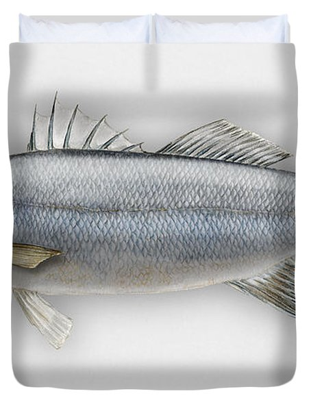 European Seabass Dicentrarchus Labrax - Bar Commun - Loup De Mer - Lubina - Havabor - Seafood Art Duvet Cover