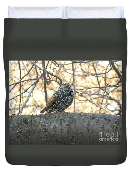 Duvet Cover featuring the photograph European Starling by Emmy Marie Vickers