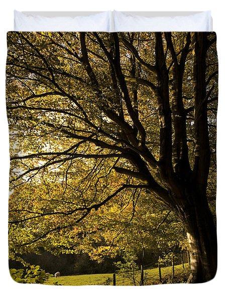 Evening Beech Duvet Cover by Anne Gilbert