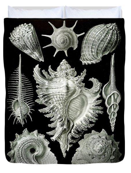 Assorted Sea Shells Duvet Cover