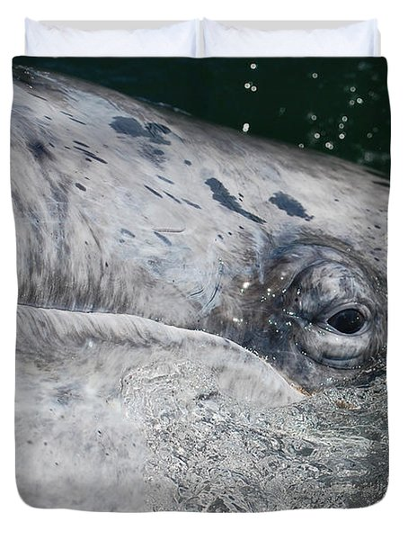 Eye Of A Young Gray Whale Duvet Cover by Don Schwartz