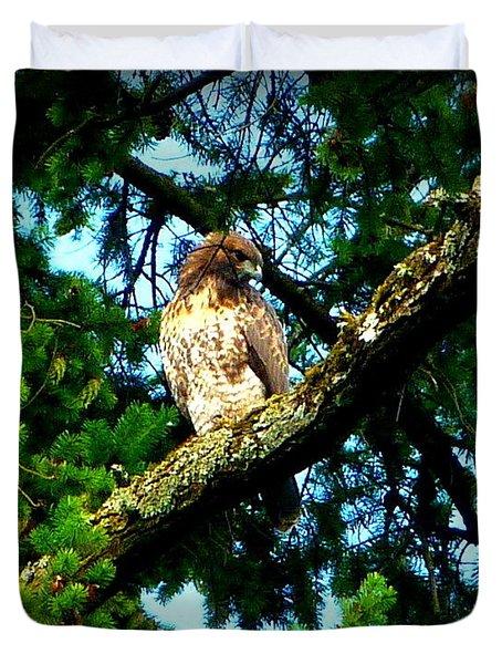 Falcon High Duvet Cover by Susan Garren