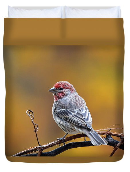 Fall Finch Duvet Cover
