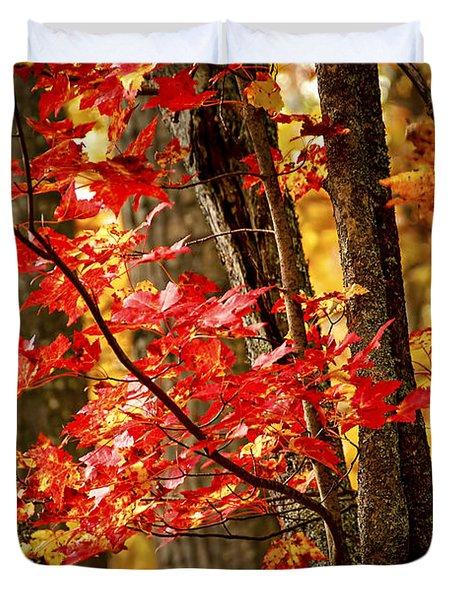Fall Forest Detail Duvet Cover by Elena Elisseeva