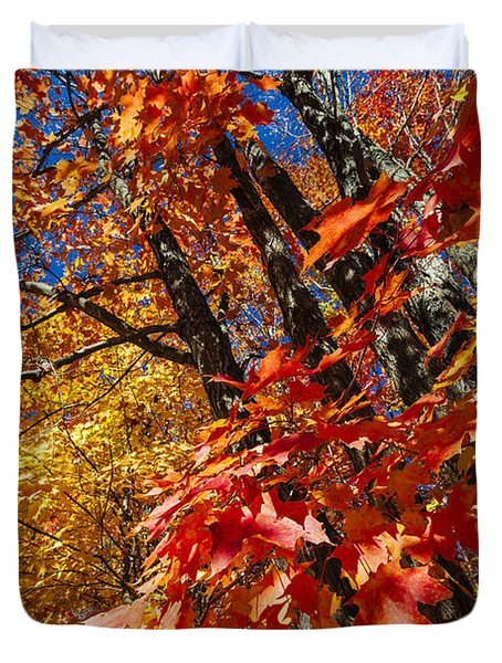 Fall Maple Forest Duvet Cover by Elena Elisseeva