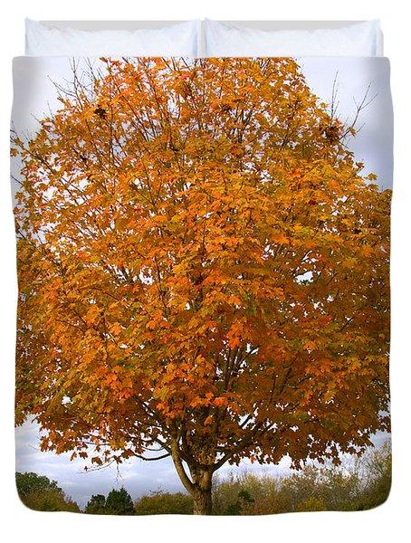 Fall Sugar Maple Duvet Cover by Melinda Fawver