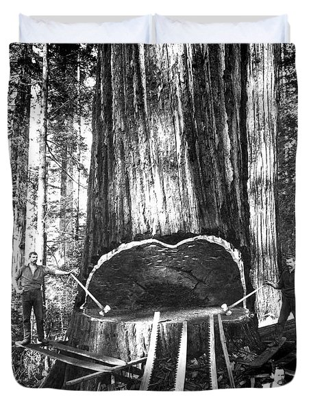 Falling A Giant Sequoia C. 1890 Duvet Cover by Daniel Hagerman