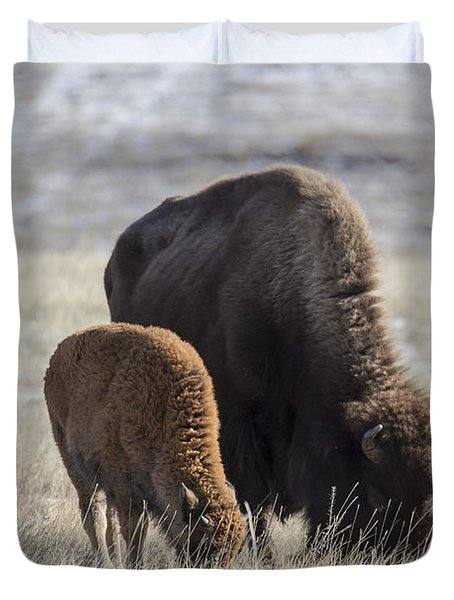 Bison Calf Having A Meal With Its Mother Duvet Cover