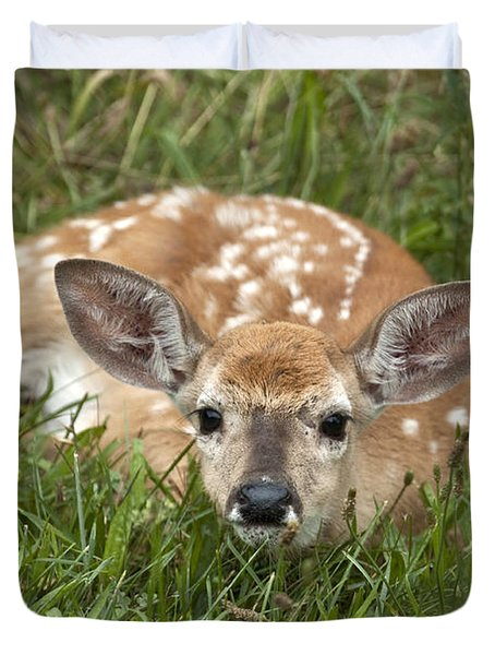 Fawn Duvet Cover by Jeannette Hunt