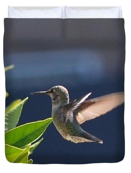Female Anna Humming Bird Duvet Cover
