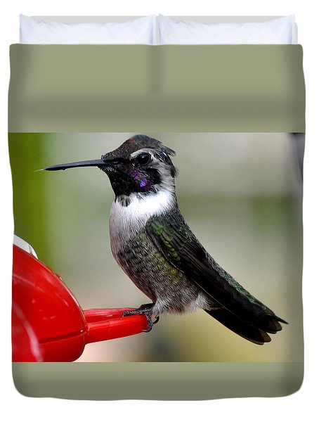 Duvet Cover featuring the photograph Male Anna On Feeder Perch Posing by Jay Milo
