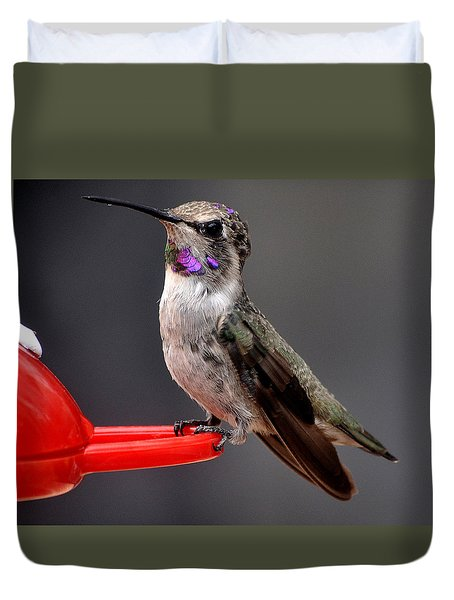 Duvet Cover featuring the photograph Female Anna's Hummingbird On Perch Posing For Her Supper by Jay Milo