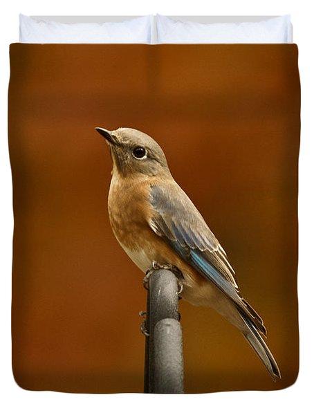 Duvet Cover featuring the photograph Female Bluebird by Robert L Jackson