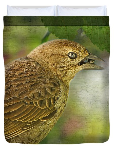 Female Brownheaded Cowbird Duvet Cover