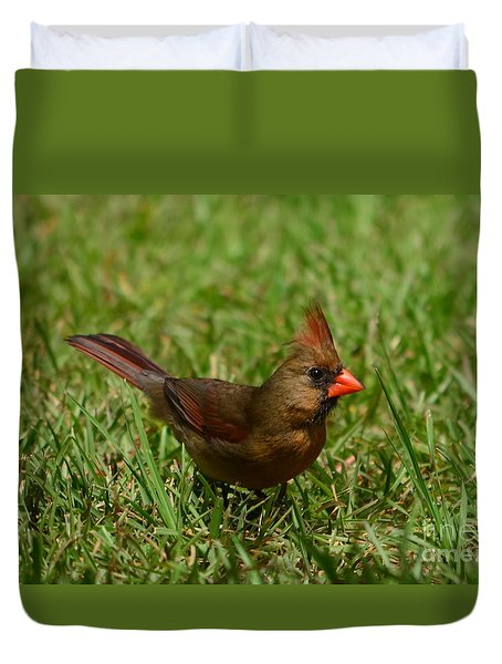 Duvet Cover featuring the photograph Female Cardinal by Bob Sample