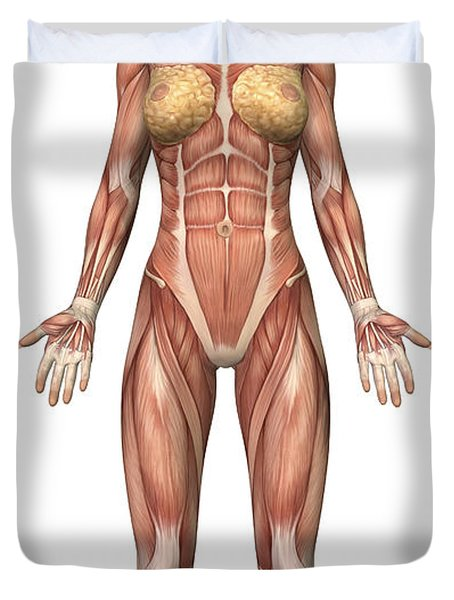 Female Muscular System, Front View Duvet Cover by Stocktrek Images