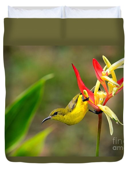 Female Olive Backed Sunbird Clings To Heliconia Plant Flower Singapore Duvet Cover