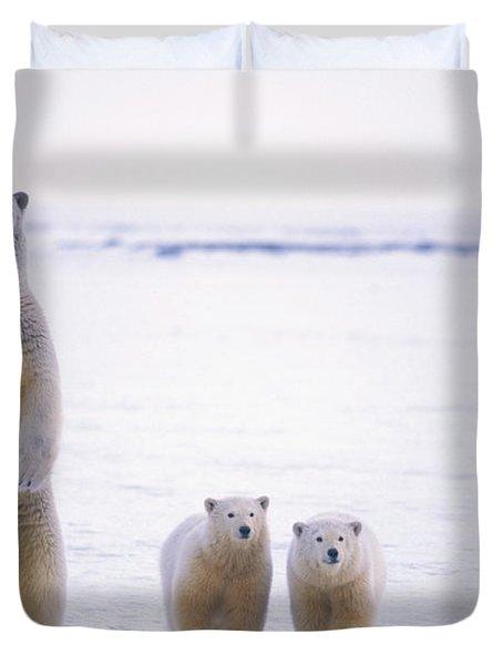 Female Polar Bear Standing With Her Two Duvet Cover by Steven Kazlowski