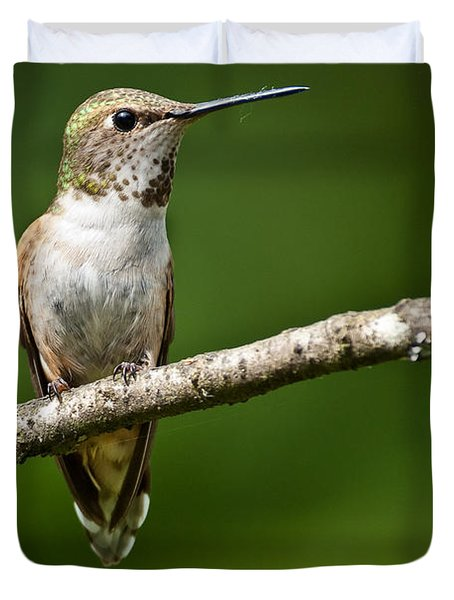 Female Rufous Hummingbird In A Tree Duvet Cover by Jeff Goulden