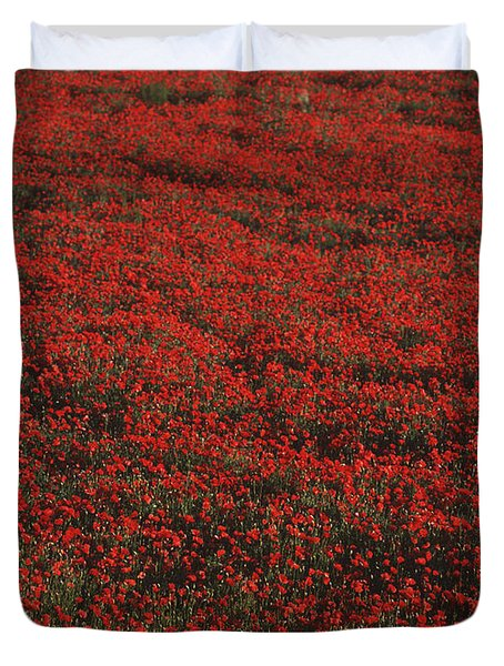 Field Of Red Poppies Duvet Cover by Ian Cumming