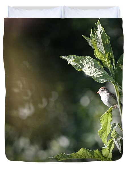 Field Sparrow Duvet Cover by Melinda Fawver