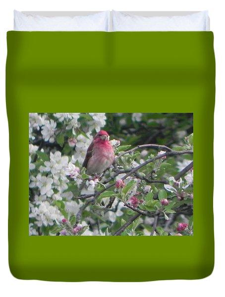 Finch In Apple Tree Duvet Cover