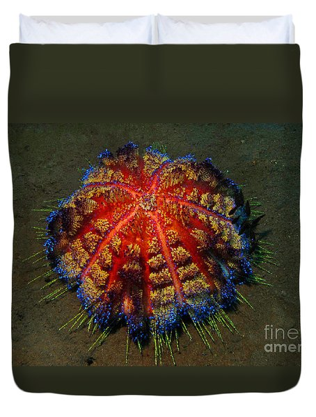 Fire Sea Urchin Duvet Cover by Sergey Lukashin