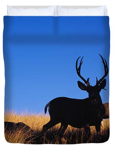 Five Mule Deer In A Field, Montana, Usa Duvet Cover