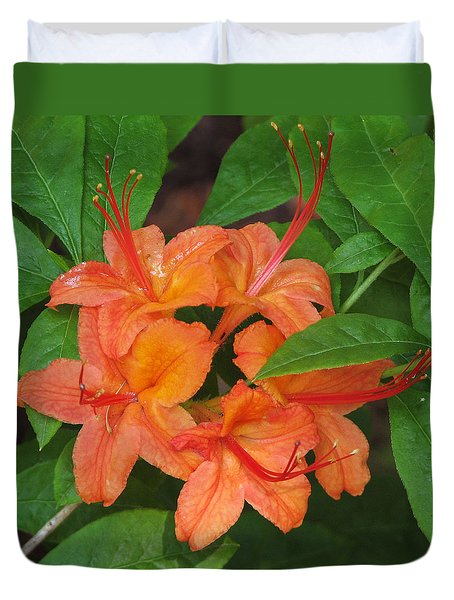 Duvet Cover featuring the photograph Flame Azalea by Chris Anderson