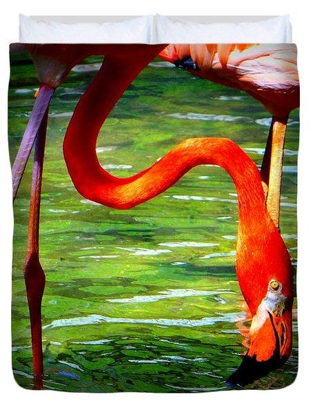 Flamingo Duvet Cover by David Mckinney