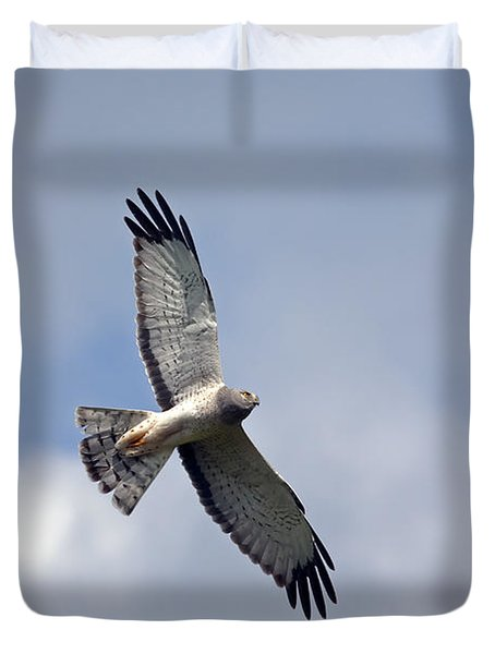 Flight Of The Harrier Duvet Cover by Mike  Dawson