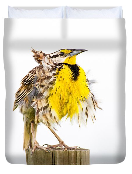 Flluffy Meadowlark Duvet Cover by Bill Swindaman
