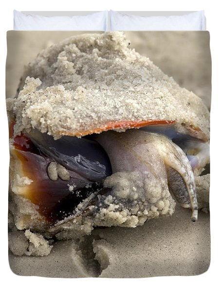 Duvet Cover featuring the photograph Florida Fighting Conch by Meg Rousher