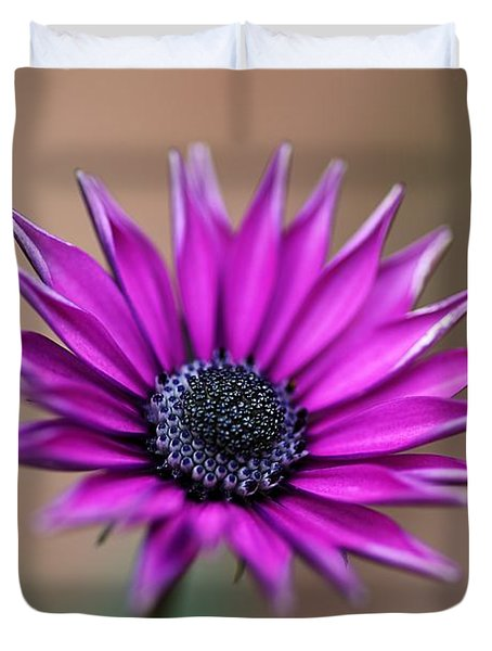 Flower-daisy-purple Duvet Cover